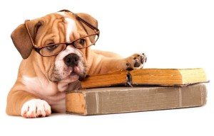 Dog-Books-flip-e1434327019271