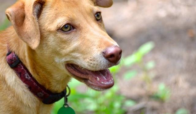 Silvie Profile Pic1