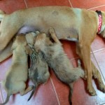 Cusca pups profile size