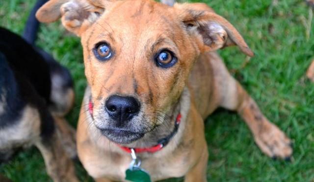 Scooby Profile Photo