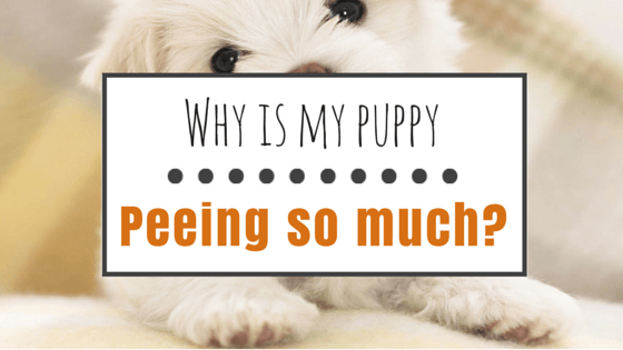Housetraining Your Puppy
